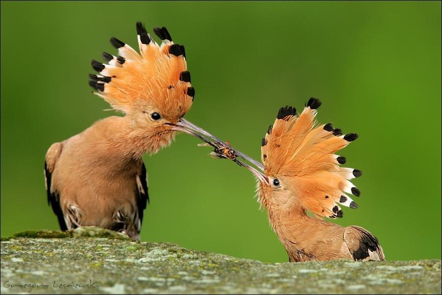Прикольные и смешные птицы - картинки и фотографии с надписями 16