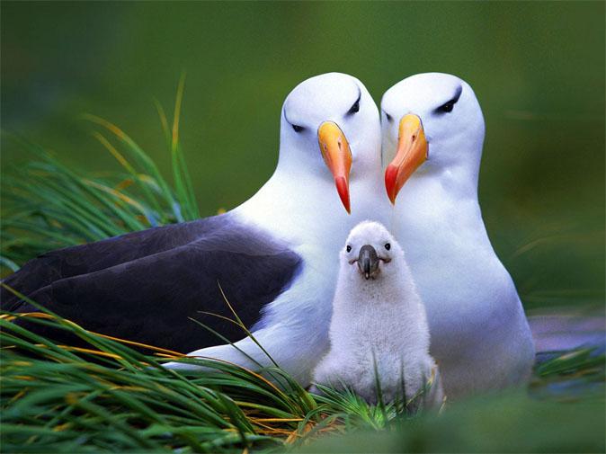 Прикольные и смешные птицы - картинки и фотографии с надписями 2