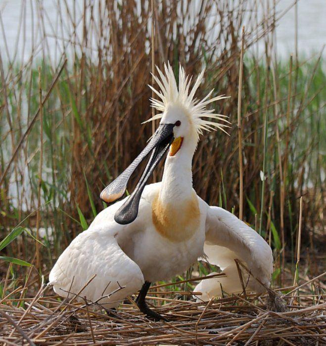 Прикольные и смешные птицы - картинки и фотографии с надписями 7