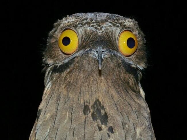 Прикольные и смешные птицы - картинки и фотографии с надписями 8