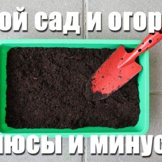 Свой сад и огород, плюсы и минусы. Нужно ли заниматься садоводством 1