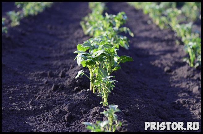 Свой сад и огород, плюсы и минусы. Нужно ли заниматься садоводством 2