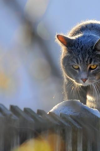 Скачать картинки котиков на телефон - лучшая сборка изображений 1