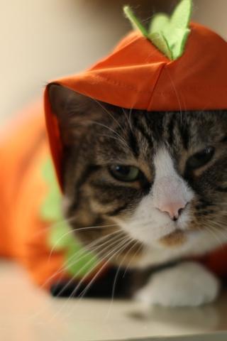 Скачать картинки котиков на телефон - лучшая сборка изображений 12