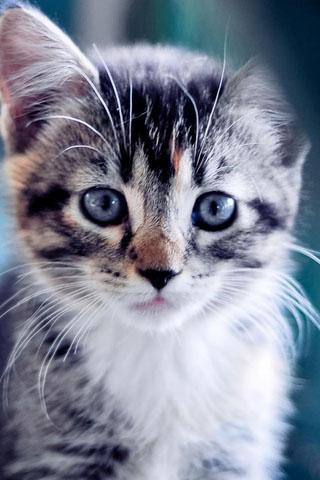 Скачать картинки котиков на телефон - лучшая сборка изображений 13