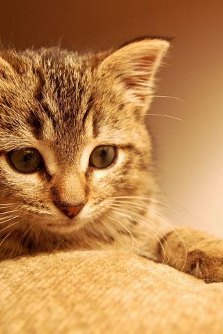 Скачать картинки котиков на телефон - лучшая сборка изображений 15