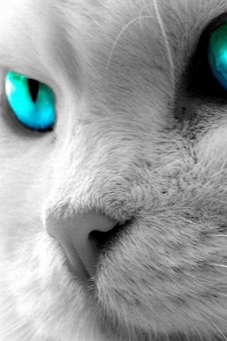 Скачать картинки котиков на телефон - лучшая сборка изображений 16