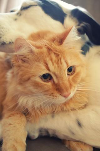 Скачать картинки котиков на телефон - лучшая сборка изображений 2