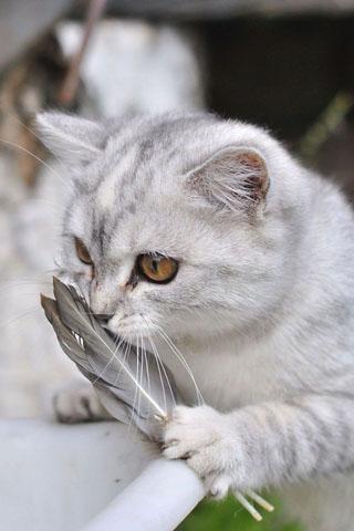 Скачать картинки котиков на телефон - лучшая сборка изображений 6