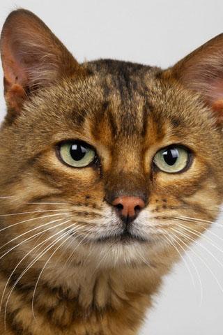 Скачать картинки котиков на телефон - лучшая сборка изображений 8