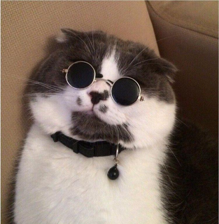 Смешные картинки с котами и кошками - прикольная коллекция 1