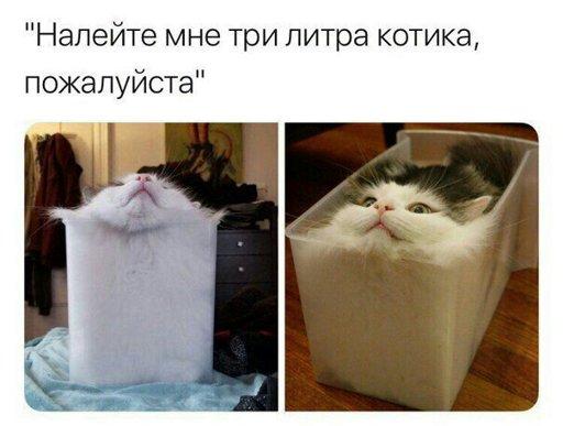 Смешные картинки с котами и кошками - прикольная коллекция 12