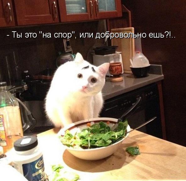 Смешные картинки с котами и кошками - прикольная коллекция 13