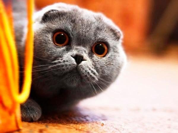Смешные картинки с котами и кошками - прикольная коллекция 14