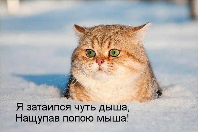 Смешные картинки с котами и кошками - прикольная коллекция 2