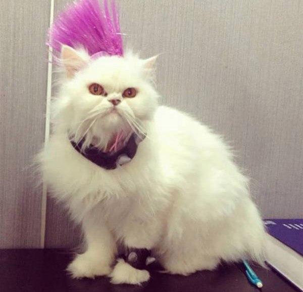 Смешные картинки с котами и кошками - прикольная коллекция 3