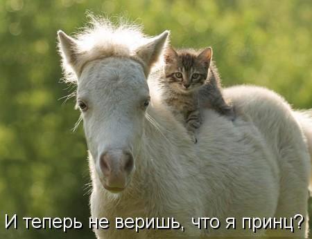 Смешные картинки с котами и кошками - прикольная коллекция 4