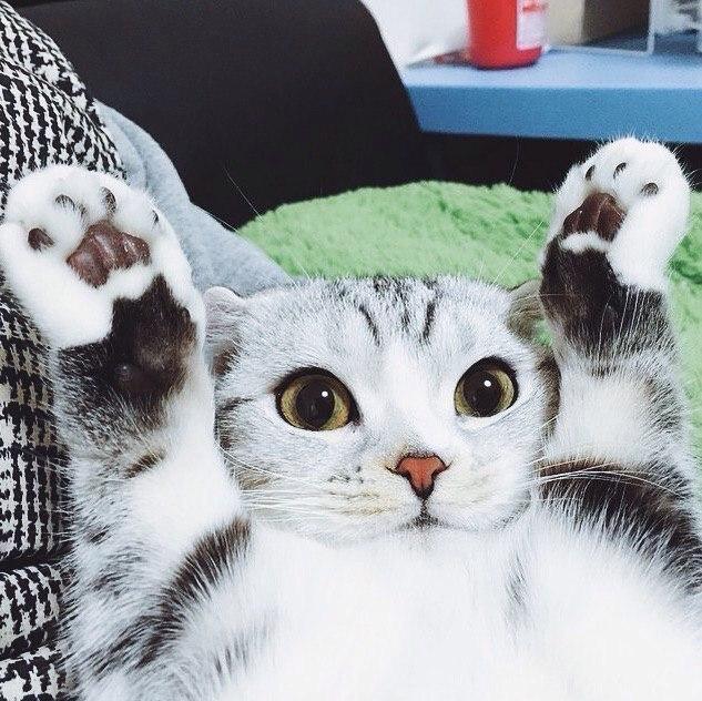 Смешные картинки с котами и кошками - прикольная коллекция 5