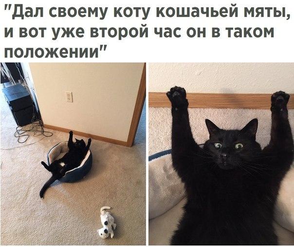 Смешные картинки с котами и кошками - прикольная коллекция 6