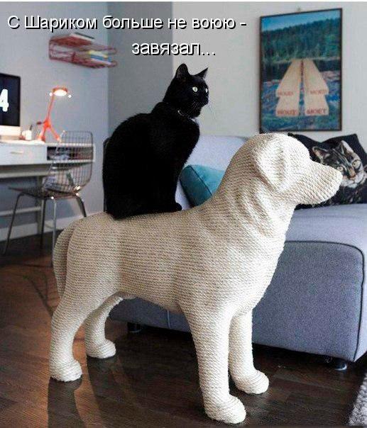 Смешные картинки с котами и кошками - прикольная коллекция 7