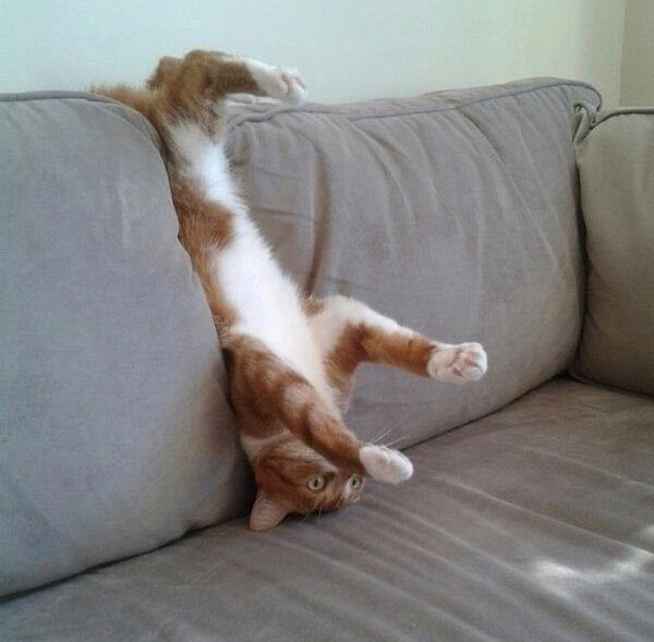 Смешные картинки с котами и кошками - прикольная коллекция 8