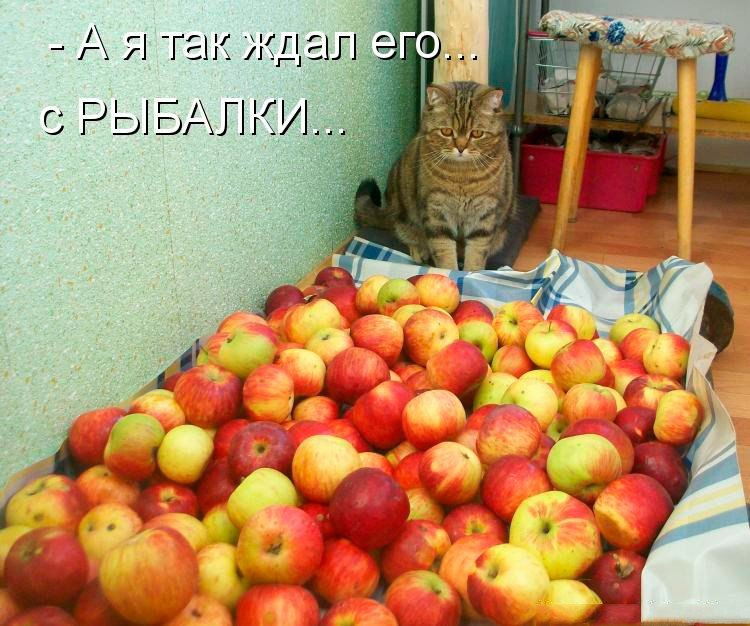 Смешные картинки с котами и кошками - прикольная коллекция 9