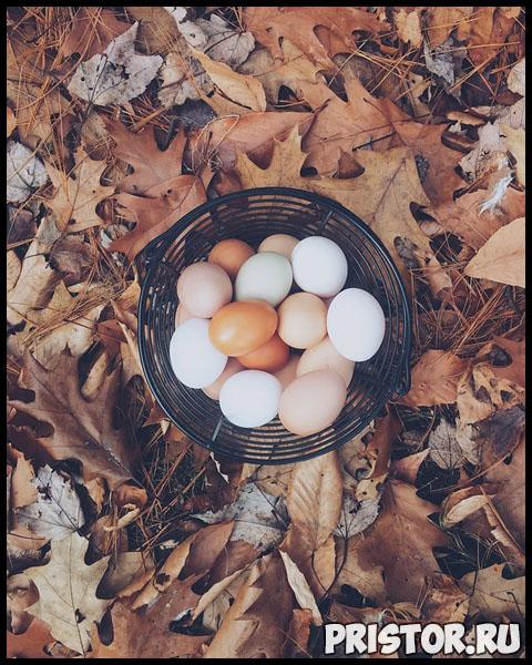 Чем отличаются коричневые яйца от белых В чем разница 1