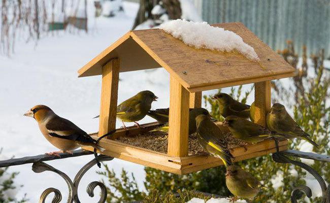 Как сделать кормушку для птиц своими руками - идеи из дерева, бутылки, коробок 1