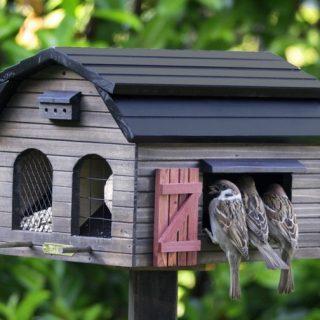 Как сделать кормушку для птиц своими руками - идеи из дерева, бутылки, коробок 12