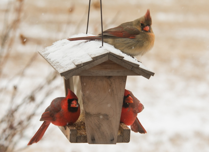 Как сделать кормушку для птиц своими руками - идеи из дерева, бутылки, коробок 15