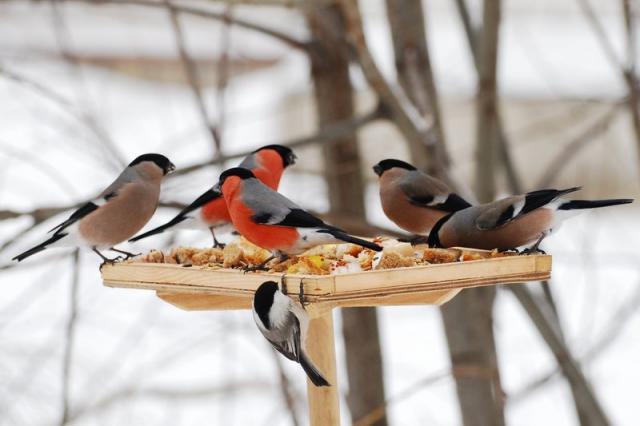 Как сделать кормушку для птиц своими руками - идеи из дерева, бутылки, коробок 5