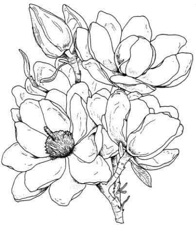 Картинки для срисовки цветы, цветочки - красивые и прикольные 2