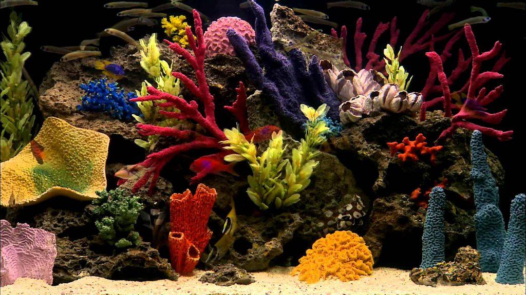 Картинки на рабочий стол аквариум - красивые и прикольные 3