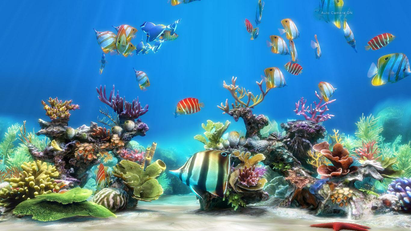 Картинки на рабочий стол аквариум - красивые и прикольные 4