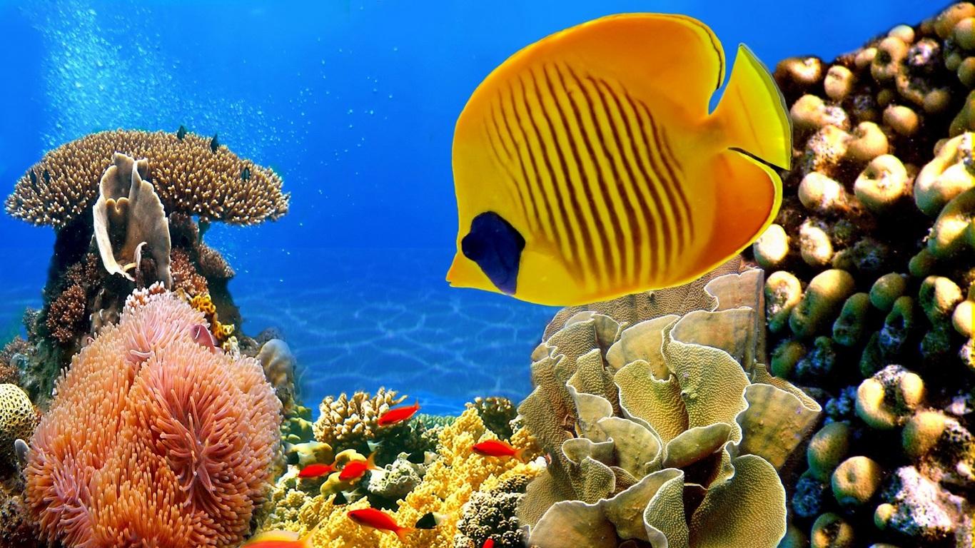 Картинки на рабочий стол аквариум - красивые и прикольные 7