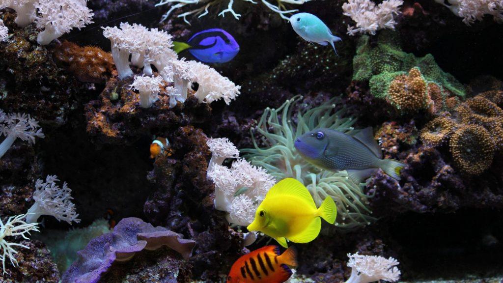 Картинки на рабочий стол аквариум - красивые и прикольные 8
