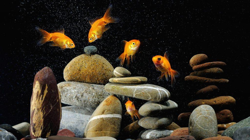 Картинки на рабочий стол аквариум - красивые и прикольные 9