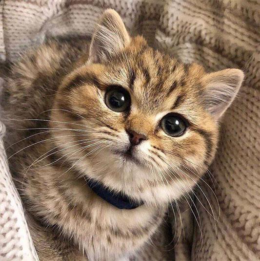 Красивые и прикольные фото кошек - лучшая подборка 1