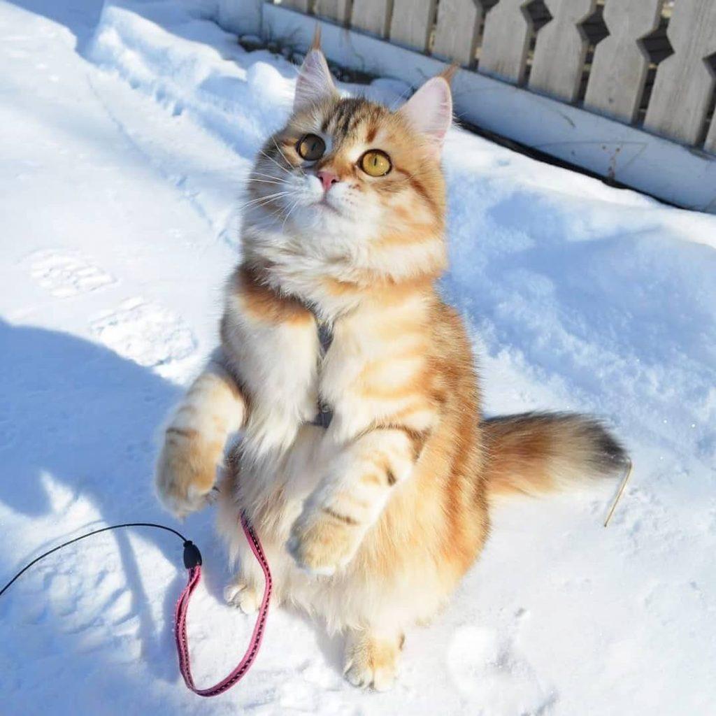 Красивые и прикольные фото кошек - лучшая подборка 11