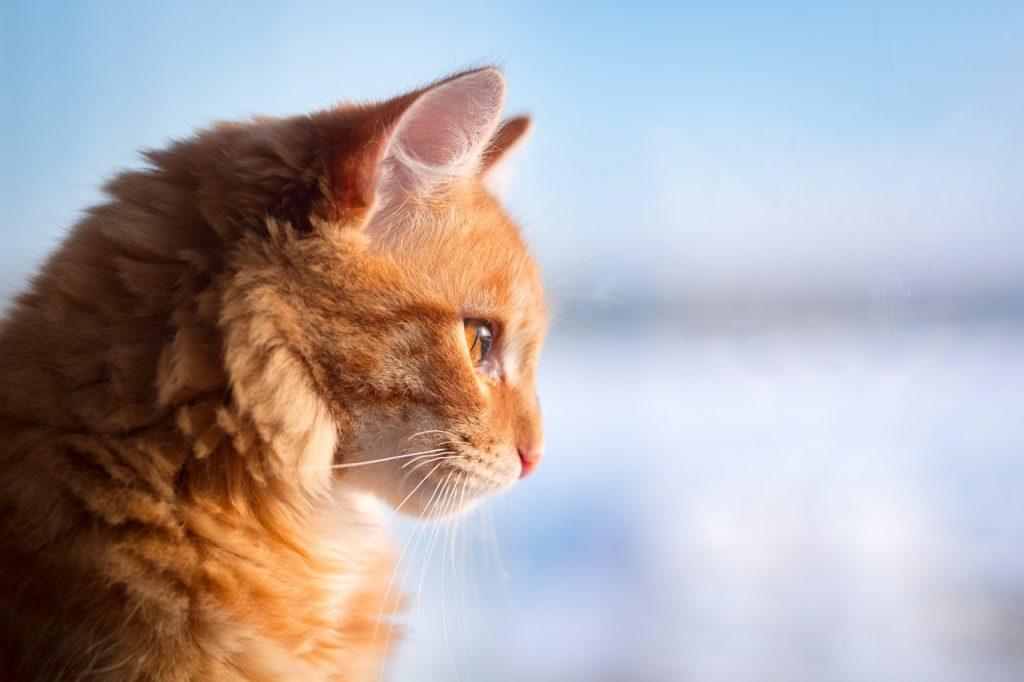 Красивые и прикольные фото кошек - лучшая подборка 22