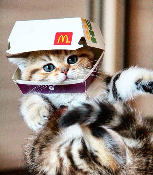 Красивые и прикольные фото кошек - лучшая подборка 3