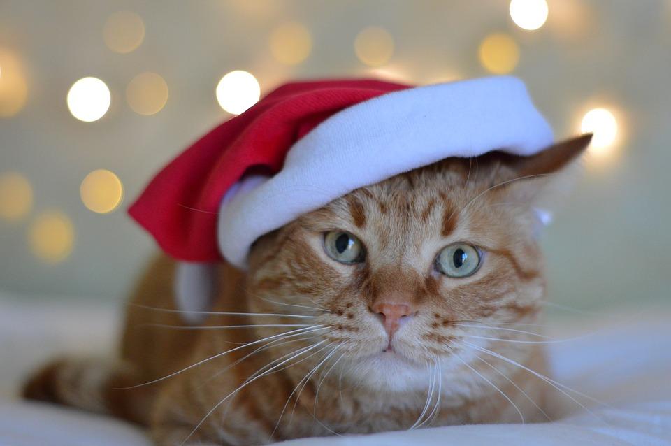 Красивые и прикольные фото кошек - лучшая подборка 4