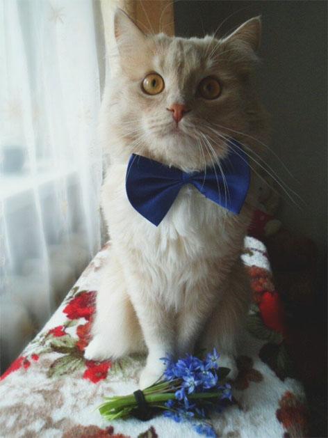 Красивые и прикольные фото кошек - лучшая подборка 5