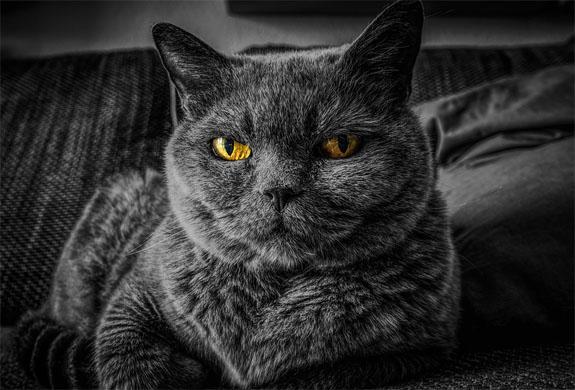 Красивые и прикольные фото кошек - лучшая подборка 7