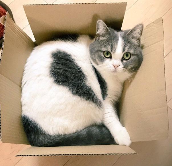 Красивые и прикольные фото кошек - лучшая подборка 8