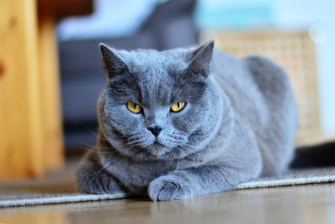 Красивые и прикольные фото кошек - лучшая подборка 9