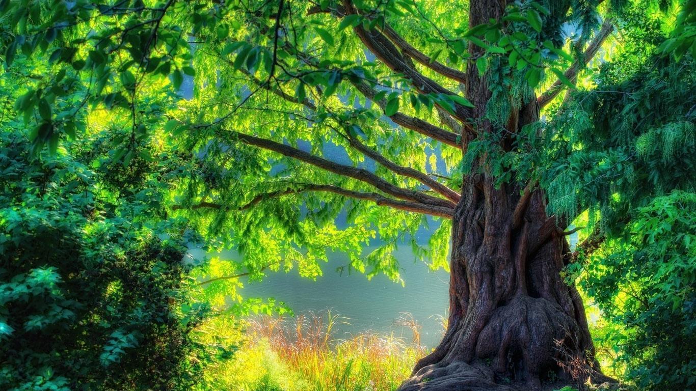 Красивые и удивительные картинки природы - прикольная коллекция 20