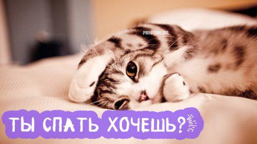 Красивые картинки и открытки Пора спать - для близкого человека 10