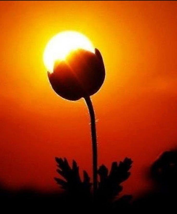 Красивые картинки, как люди держат Солнце руками - подборка 2