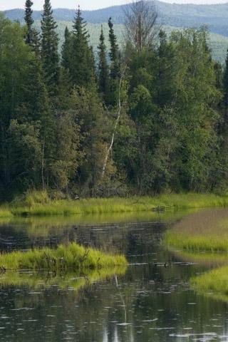 Красивые картинки на телефон на тему Лес - подборка 2